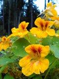 Fleurs oranges macro photo stock