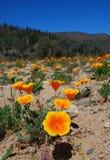 Fleurs oranges par un lac Image libre de droits