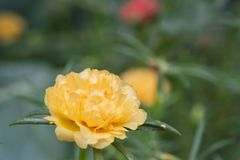 Fleurs oranges sur le jardin photo libre de droits