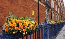 Fleurs oranges sur les barrières en acier bleues photo stock
