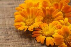 Fleurs oranges Traitement apaisant thérapeutique de station thermale image stock