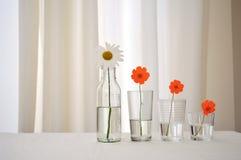 Fleurs organisées par taille images stock