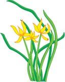 Fleurs orientales Photos libres de droits