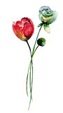 Fleurs originales d'été Image stock