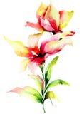 Fleurs originales de lis Image stock