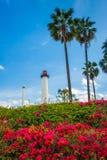 Fleurs, palmiers, et phare de port de Long Beach Image libre de droits