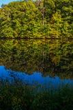Fleurs par l'au bord du lac Images stock