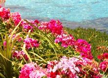 Fleurs par l'océan image stock
