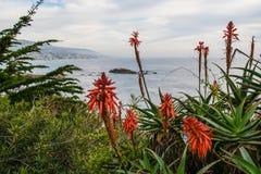 Fleurs par la plage Photographie stock libre de droits