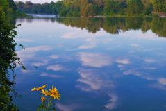 Fleurs par la rivière Photos stock