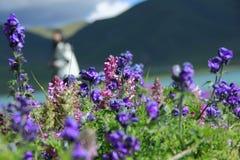 Fleurs par la rivière Images libres de droits