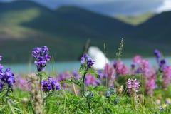 Fleurs par la rivière Photographie stock libre de droits