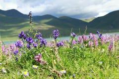 Fleurs par la rivière Photographie stock