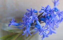 Fleurs parfumées de ressort dans un verre Images stock