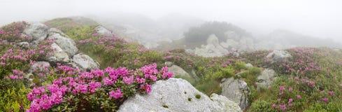 Fleurs parmi les pierres images libres de droits