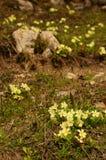 Fleurs parmi les roches photos libres de droits