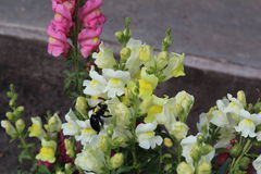 Fleurs, peinture, maison, belle, abeille photos libres de droits