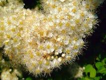 Fleurs pelucheuses image stock