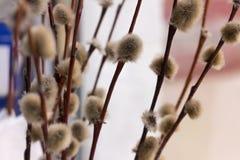 fleurs pelucheuses gentilles Photos libres de droits
