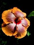 Fleurs pendant la nuit Photographie stock