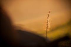Fleurs pendant le matin Photographie stock libre de droits