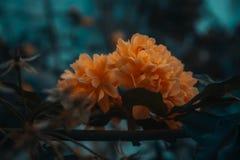Fleurs pendant un jour froid photo stock