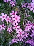 Fleurs image stock