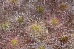 Fleurs peu communes Images libres de droits