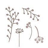 Fleurs peu communes simples Photos stock