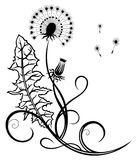 Fleurs, pissenlit Image stock
