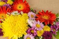 Fleurs polychromes Image stock