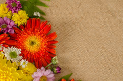Fleurs polychromes Photos stock