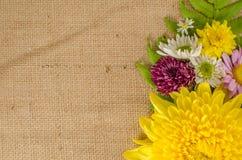 Fleurs polychromes Photographie stock