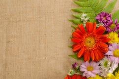 Fleurs polychromes Image libre de droits
