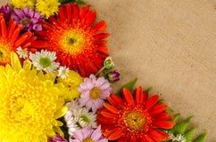 Fleurs polychromes Photo libre de droits