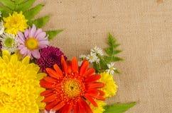 Fleurs polychromes Photographie stock libre de droits