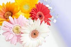 Fleurs pour la table Photos libres de droits