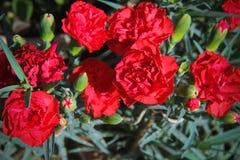 Fleurs pour le fond beau images libres de droits
