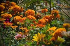 Fleurs pour le fond beau photographie stock