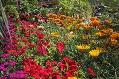Fleurs pour le fond beau photos libres de droits