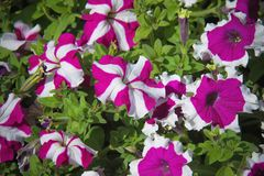 Fleurs pour le fond beau photographie stock libre de droits