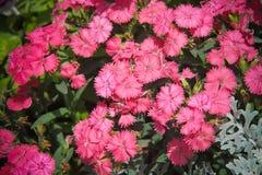 Fleurs pour le fond beau image libre de droits