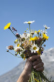 Fleurs pour vous Photo stock