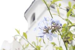Fleurs pourprées images stock