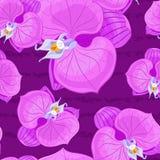 Fleurs pourprées colorées d'orchidée Photographie stock libre de droits