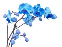 Fleurs pourprées colorées d'orchidée image stock