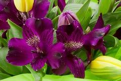 Fleurs pourprées d'Alstroemeria photographie stock libre de droits