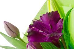 Fleurs pourprées d'Alstroemeria images libres de droits