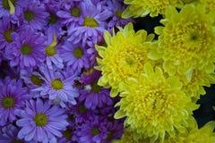 Fleurs pourprées et jaunes Photos stock