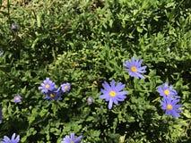 Fleurs pourprées et jaunes Photo stock